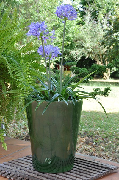 Pot Sydney vert de la collection spéciale Grand Sud, les Poteries d'Albi