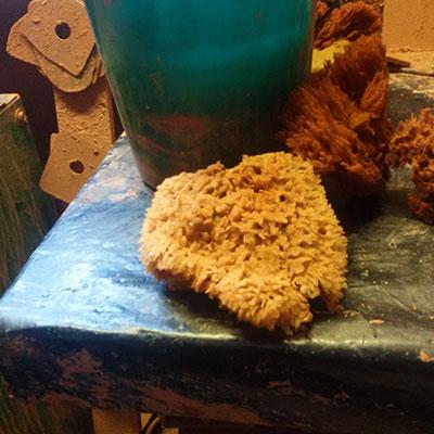 Une éponge naturelle à l'Atelier des Poteries d'Albi