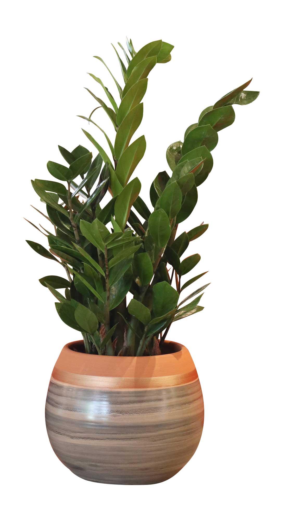 6 Plantes dépolluantes pour un confinement serein - Les Poteries d'Albi